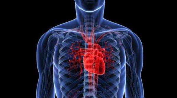 Nattokinase 200mg, Blood pressure, Cardiovascular health 2