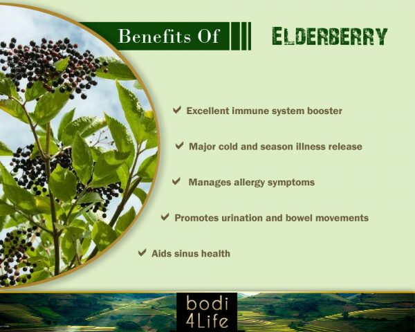 Elderberry Powder 10:1 Extract - 100% Pure Natural Chemical Free (4oz > 5 lb) 3