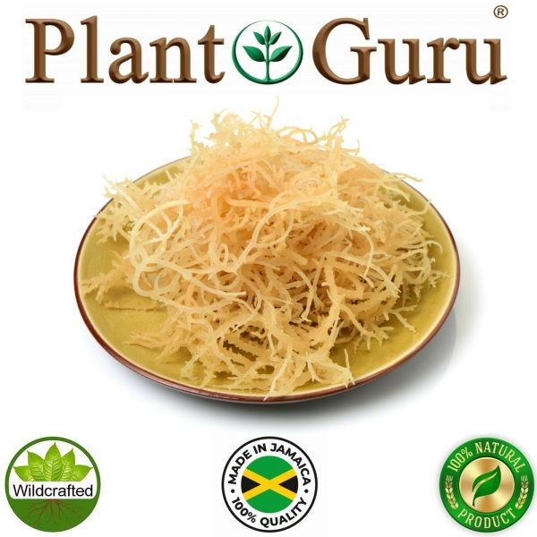 Irish Sea Moss Whole Leaf 100% Pure Raw WildCrafted Chondrus Crispus Bulk 2