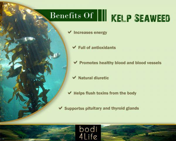 Kelp Seaweed Powder - 100% Pure Natural Chemical Free (4oz > 5 lb) 3