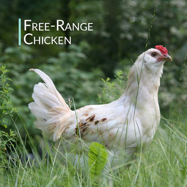 Chicken Bone Broth Collagen Powder - Pure & Organic - Free-Range (300g) 4