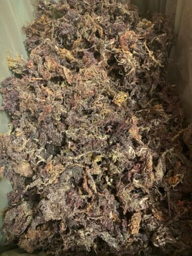 WILDCRAFTED Raw Purple Sea Moss Organic 2-20oz Real deal from Jamaica - READ!!!