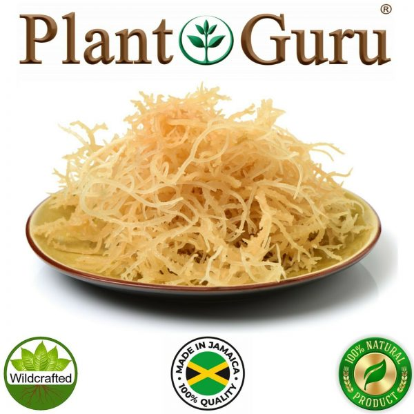 Irish Sea Moss Whole Leaf 100% Pure Raw WildCrafted Chondrus Crispus Bulk