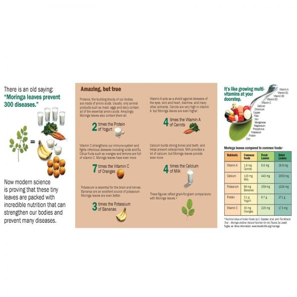 4X BOTTLE OF Moringa Oleifera Vegetarian 240 Doses NATURAL ORGANIC SUPERFOOD  1