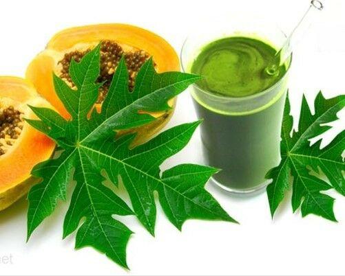 Papaya Leaf Powder - 100% Pure Natural Chemical Free (4oz > 5 lb) 2