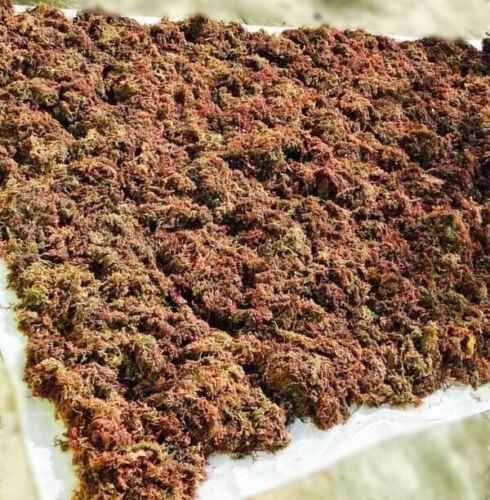 WILDCRAFTED Raw Purple Sea Moss Organic 2-20oz Real deal from Jamaica - READ!!! 7