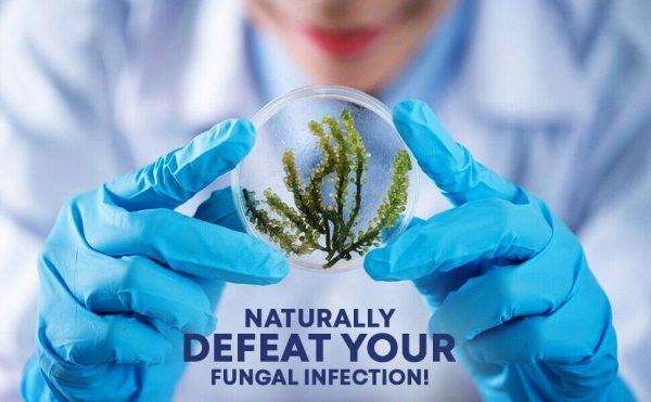 Fungus Clear Premium Probiotic 15 Billion CFU Improves Toe Nail Health 60 Caps 5