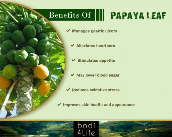 Papaya Leaf Powder - 100% Pure Natural Chemical Free (4oz > 5 lb) 3
