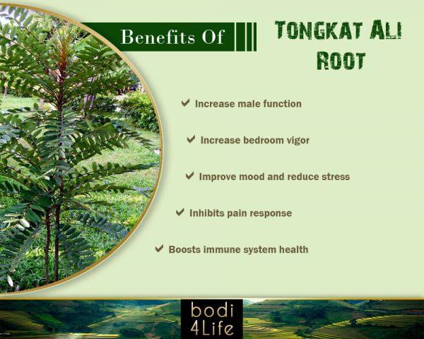 Tongkat Ali Root Powder 10:1 Extract - Pure Natural Chemical Free (2oz > 32oz) 3