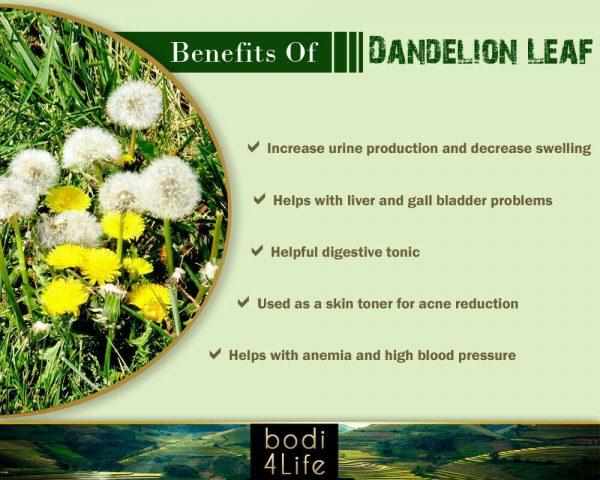 Dandelion Leaf Powder - 100% Pure Natural Chemical Free (4oz > 5 lb) 3