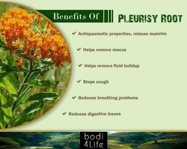Pleurisy Root Powder - 100% Pure Natural Chemical Free (4oz > 2 lb) 3