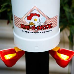 Dine a Chook Chicken Drinker Twin Pack 1
