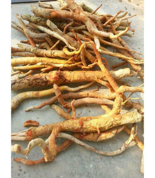 Tongkat Ali Root Powder 10:1 Extract - Pure Natural Chemical Free (2oz > 32oz) 4