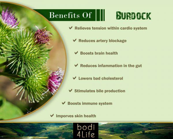 Burdock Root Powder - 100% Pure Natural Chemical Free (4oz > 20 lb) 3