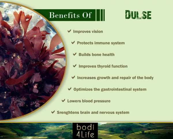 Dulse Seaweed Authentic Flake - 100% Pure Natural Chemical Free (4oz > 2lb) 3