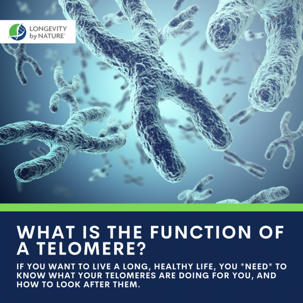 Telomere Function- Lengthen your Telomeres in Just 6 Months- Protect your DNA